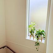 かすみ窓/FIX窓/階段の窓/植物のある暮らし/最高の癒し...などのインテリア実例 - 2021-03-28 08:35:47