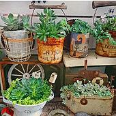 キッチン/お家時間/多肉植物の寄せ植え/幸せな気持ち♥/植物のある暮らし...などのインテリア実例 - 2020-07-09 23:03:12