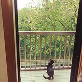木蓮の花/休日は雨/ねこのいる風景/黒猫ミースケ/バス/トイレのインテリア実例 - 2021-04-17 06:45:55