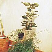 リビング/一人暮らし/グリーンのある暮らし/観葉植物/カフェ風...などのインテリア実例 - 2021-06-18 21:56:31