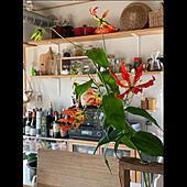 IDEE/グロリオサ/花を生ける/花器/キッチンのインテリア実例 - 2021-05-10 10:16:22