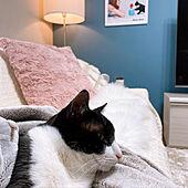 ニトリ/フランフラン/猫と暮らす/マンション暮らし/暖かい家...などのインテリア実例 - 2021-01-23 23:55:32