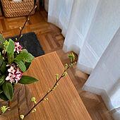 癒しセット/季節を楽しむ暮らし/花のある暮らし/沈丁花/コデマリの枝...などのインテリア実例 - 2021-03-13 17:41:36
