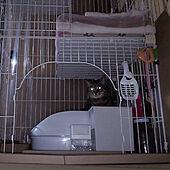ベッド周り/猫トイレ/ねこのいる日常/ねこと暮らす。/ニャンとも...などのインテリア実例 - 2021-06-22 20:58:44