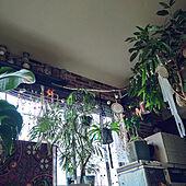 部屋全体/元息子の部屋を私の部屋に/NO GREEN NO LIFE/エバーフレッシュ/ショウナンゴムノキ アムステルダム...などのインテリア実例 - 2021-06-15 06:05:29