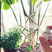 BotaNice/植物のある暮らし/コバエ対策/多肉植物/観葉植物のインテリア実例 - 2021-05-14 07:41:54