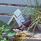 DIYウッドフェンス/ウッドフェンス/小鳥が来た!/ラセンイ/観葉植物...などのインテリア実例 - 2021-07-24 12:18:37