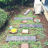 ディコンドラ/DIY/庭/ガーデニングのインテリア実例 - 2020-07-04 21:08:52