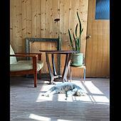 生活感/リノベーション/アンティーク/観葉植物/木が好き...などのインテリア実例 - 2020-09-26 01:57:59