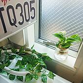 バス/トイレ/グリーン/水耕栽培/観葉植物のインテリア実例 - 2021-04-08 08:24:00
