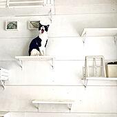 犬と猫との生活/ペットと暮らす賃貸/犬と猫と暮らす/賃貸でも諦めない!/猫のいる暮らし...などのインテリア実例 - 2020-06-25 14:56:22
