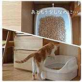 リビング/猫トイレ/ねこのいる日常/ねこと暮らす。/ニャンとも...などのインテリア実例 - 2021-06-11 22:30:06