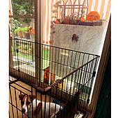 多肉寄せ植え/多肉植物/ジャックラッセルテリアのいる家/ハロウィン/ハロウィン飾り...などのインテリア実例 - 2021-09-21 15:01:37