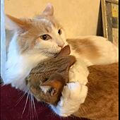 メインクーン/保護猫/猫のいる日常/ベッド周りのインテリア実例 - 2021-04-22 01:52:00