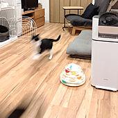リビング/無印良品/猫と暮らす/猫大好き/猫ばかりですみません...などのインテリア実例 - 2021-06-19 22:28:55