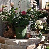 玄関/入り口/ガーデンピック/朝の風景/癒しの空間/いい香り...などのインテリア実例 - 2021-04-17 02:37:24