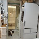 キッチン/モニター応募投稿/シャープ冷蔵庫のインテリア実例 - 2021-02-16 00:32:54