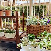 観葉植物/ベランダ/花台DIY/100均/シェードガーデン...などのインテリア実例 - 2021-01-26 08:40:49