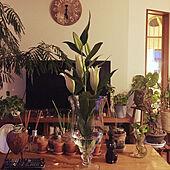 ノットアンティークス/植物のある生活/植物のある暮らし/植物と暮らす/観葉植物...などのインテリア実例 - 2020-04-06 18:29:47
