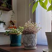 棚/観葉植物/グリーンのある暮らし/グリーンインテリア/陶器鉢...などのインテリア実例 - 2021-07-25 19:57:42