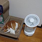 ベッド周り/扇風機・サーキュレーター/RCの皆さまに感謝♡/猫ちゃん想い/ねこが好き...などのインテリア実例 - 2021-07-28 20:28:11