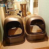 バス/トイレ/猫トイレ/ねこのいる日常/ニャンとも清潔トイレ/ねこと暮らす。...などのインテリア実例 - 2020-04-08 18:32:07