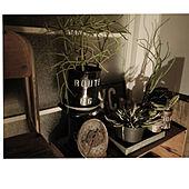 リビング/りんご箱/サボテン/アパート/植物のある生活...などのインテリア実例 - 2020-03-31 01:06:45