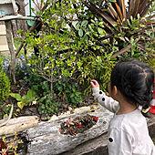 庭あそび/四季を感じる暮らし/四季を感じる窓/流木/花のある生活...などのインテリア実例 - 2021-04-11 02:52:25