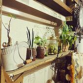 ハーバリウム/モスポット/観葉植物/植物のある暮らし/団地住まい...などのインテリア実例 - 2021-04-10 22:57:12