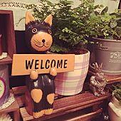玄関/入り口/一人暮らし/観葉植物/雑貨/ねこの置物のインテリア実例 - 2015-06-22 19:20:34