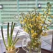 花のある暮らし/ブロッコリーの花/ガーデニング/ウッドデッキ/家庭菜園...などのインテリア実例 - 2020-03-29 16:13:59