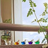 ガラス雑貨/箸置き/ビー玉/ベランダガーデン/出窓...などのインテリア実例 - 2020-08-13 18:15:51