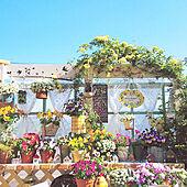 机/建売住宅/DIY/お花のある暮らし/建売を自分好みに♡...などのインテリア実例 - 2021-04-10 20:04:30
