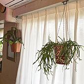 IKEA 雑貨/NO GREEN NO LIFE/ミックスインテリア/観葉植物/マンションインテリア...などのインテリア実例 - 2021-06-22 12:06:39