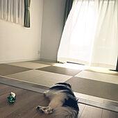 和室/部屋全体のインテリア実例 - 2021-09-27 00:09:47