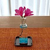 ピンクのツツジ/いちりんざし/ローテーブル リビング/つつじが満開/ツツジ開花...などのインテリア実例 - 2021-05-05 16:46:44