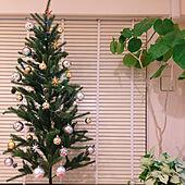 クリスマスツリー/クリスマス/男の子/IKEA/観葉植物...などのインテリア実例 - 2020-04-10 14:01:22