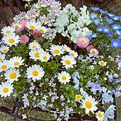 お花のリース/黄色/白/ピンク/アネモネ...などのインテリア実例 - 2021-04-13 13:16:39