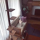 観葉植物のある暮らし/ソファ/scanteak/こたつテーブル/猫スペース...などのインテリア実例 - 2020-04-04 15:56:41