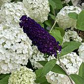 部屋全体/庭/ガーデニング/初夏/植物のある暮らし...などのインテリア実例 - 2021-06-23 10:41:24