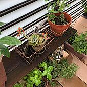 100均/ニトリ/セリア/海外インテリアに憧れる/観葉植物...などのインテリア実例 - 2020-07-07 16:41:30