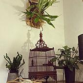鳥籠/フォロー&いいね ありがとうございます♡/バリリゾート風/観葉植物/コウモリランの板付け...などのインテリア実例 - 2021-01-23 21:58:09