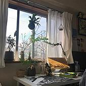 天気がいいと気持ちいい!/チランジア/チランジア・ウスネオイデス/観葉植物/苔玉コウモリラン...などのインテリア実例 - 2021-03-06 13:54:43
