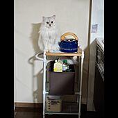 ねこのいる日常/猫のいる暮らし/猫/収納少ないキッチン/マンション暮らし...などのインテリア実例 - 2021-05-17 03:08:49