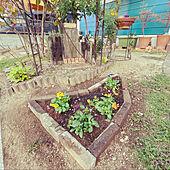グランドカバー/ビオラ/ガーデニング/自力で庭作り/馴染むデザイン...などのインテリア実例 - 2020-12-03 00:29:36