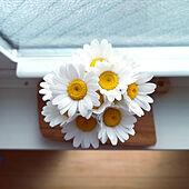 机/ノースポール/花のある暮らし/記録のインテリア実例 - 2020-04-07 22:08:18