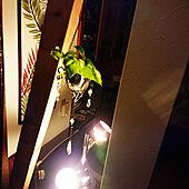 リビング/吊るし観葉植物/筋交い/観葉植物/植物のある暮らし...などのインテリア実例 - 2020-04-09 19:59:20