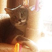 棚/猫スペース/ネコのいる風景/やすらぎ/シンプル...などのインテリア実例 - 2020-04-08 19:43:43