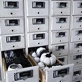図書カードの引き出し/3COINS/100均/セリア/白黒雑貨...などのインテリア実例 - 2021-09-17 20:21:57