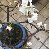 暖かい雨/今日は雨です/春ですね♪/鉢植え/ガーデン...などのインテリア実例 - 2021-03-02 15:36:13